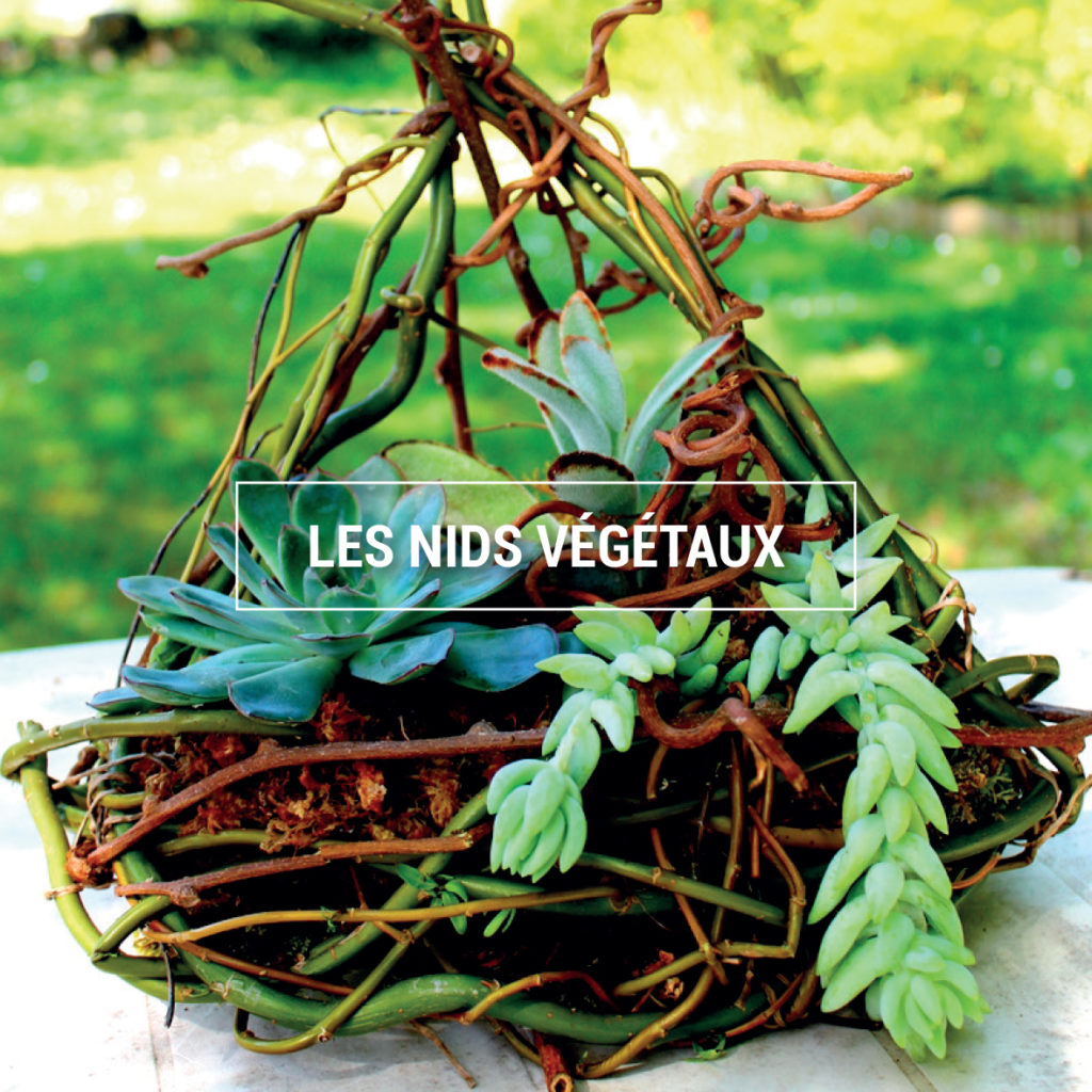 Photo d'un nid végétal
