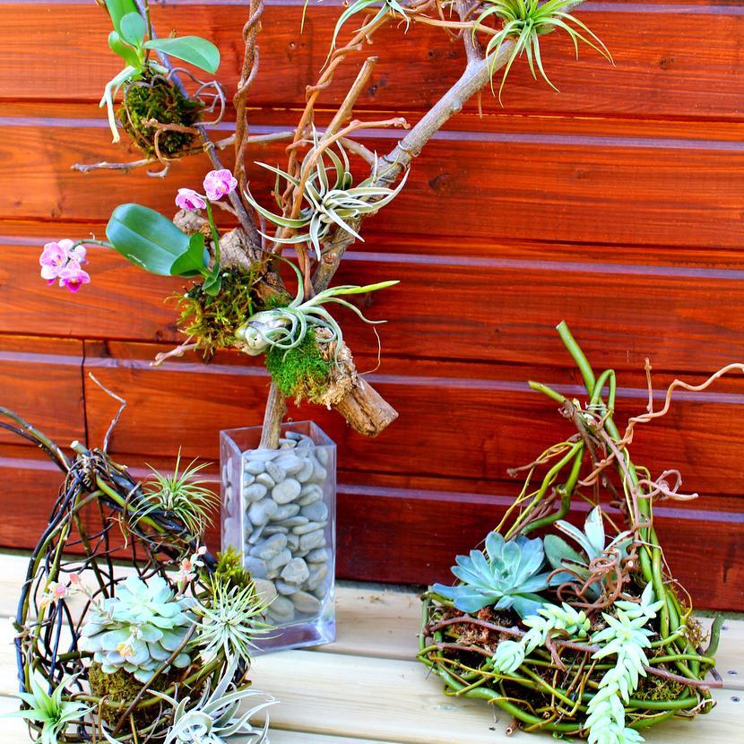 photo d'une sculpture végétale accompagnée de deux nids végétaux.