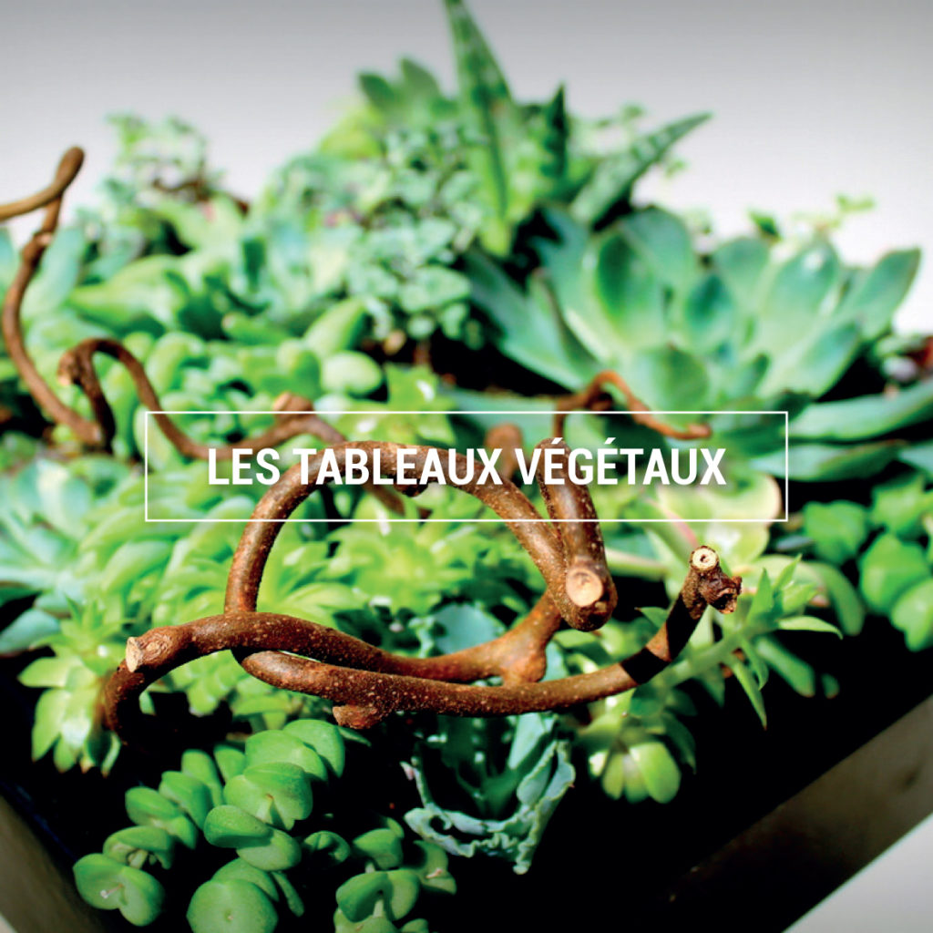 photo d'un tableau végétal composé de différentes variétés de succulentes.