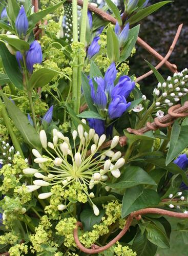 photo d'un bouquet bicolore bleu et blanc