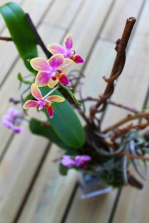 photo d'une orchidée en gros plan