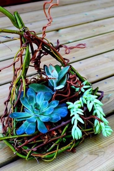 photo d'un nid végétal composé de succulentes