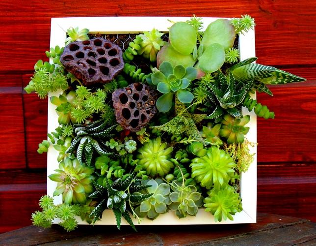 photo d'un tableau végétal